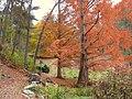 Innisfree Garden, Millbrook, NY - IMG 1580.jpg