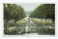 Irrigating Apple Orchard, Hagerman, N. M (NYPL b12647398-75820).tiff