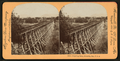 Irrigating Ditch, Riverside, Cal., U.S.A, from Robert N. Dennis collection of stereoscopic views 2.png