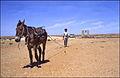 Izvlačenje vode iz bunara - Između Ghardaie i El Golee 25. travnja 1985..jpg