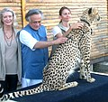 Jairam Ramesh at the Cheetah Outreach Centre near Cape Town, during his visit on April 25, 2010, to discuss cheetah translocation from South Africa to India.jpg