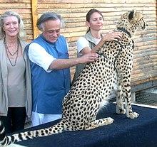 Jairam Ramesh streelde de rug van een cheetah in het Cheetah Outreach Centre nabij Kaapstad in 2010