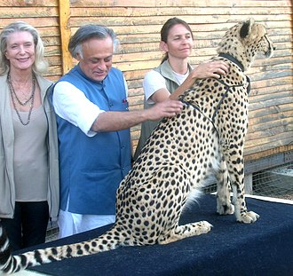 Jairam Ramesh at the Cheetah Outreach Centre near Cape Town in 2010, during his visit to discuss cheetah translocation from South Africa to India Jairam Ramesh at the Cheetah Outreach Centre near Cape Town, during his visit on April 25, 2010, to discuss cheetah translocation from South Africa to India.jpg