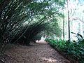 Jardim Botânico do Rio de Janeiro (3907768810).jpg