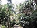 Jardim Botanico Tropical (14005315671).jpg