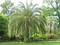 Jardin botanique Brissago.jpg