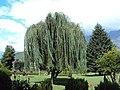 Jawaharlal Nehru Memorial Botanical Gardens, Srinagar 04.JPG