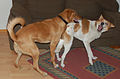 Jenny & Pilpel (2187306776).jpg