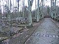 Jewish Cemetery in Sopot - panoramio (3).jpg