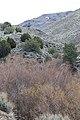 Jumbo Grade Trail - panoramio (100).jpg