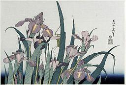 Katsushika Hokusai (1760-1849), Irissen met sprinkhaan (1820)