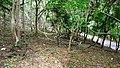 Kava - Anakkal Road in Forest, Palakkad - panoramio (2).jpg