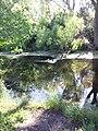 Keller Creek - Maplewood, MN - panoramio.jpg