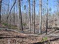 Kings Mountain National Military Park - South Carolina (8557770847) (2).jpg