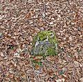 Kirchworbis - Grenzstein im Wald - panoramio.jpg