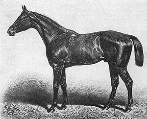 Smith v Hughes - Image: Kisber stud racehorse of Baltazzi