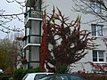 Kletterpflanze - panoramio.jpg