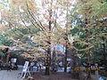 Kobe Municipal Arboretum in 2013-11-16 No,2.JPG