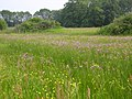 Koekoeksbloemenhooiland - panoramio.jpg