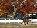 Kona Gold Kicking up his heels at the Kentucky Horse Park (3030143674).jpg