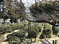 Kosaiso Tea Garden in Shukkei Garden 2.jpg