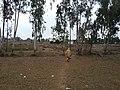 Kotli Noonan, Pakistan - panoramio (27).jpg