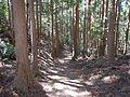 Kumano Kodo Kogumotorigoe World heritage30.JPG
