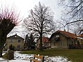 Lípa presidenta T. G. Masaryka u školy v Lánech (Q107161809) 02.jpg