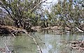 Lachlan River at Booligal NSW 1.jpg