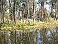 Lago de Cuemanco.jpg