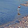 Laguna Chaxa-CTJ-IMG 5862.jpg