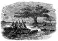 Lake Ngami-p497.png