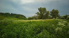 Landscape in Krasnogorsky District, Altai Krai.jpg