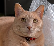 Larry the cat laying with bubble wrap (DSCF6686).jpg