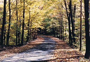 Laurel Highlands - Autumn on a small road in Somerset County.