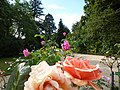 Le jardin du thabor - panoramio (6).jpg