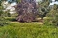 Leatherhead, The Mansion, pond.jpg