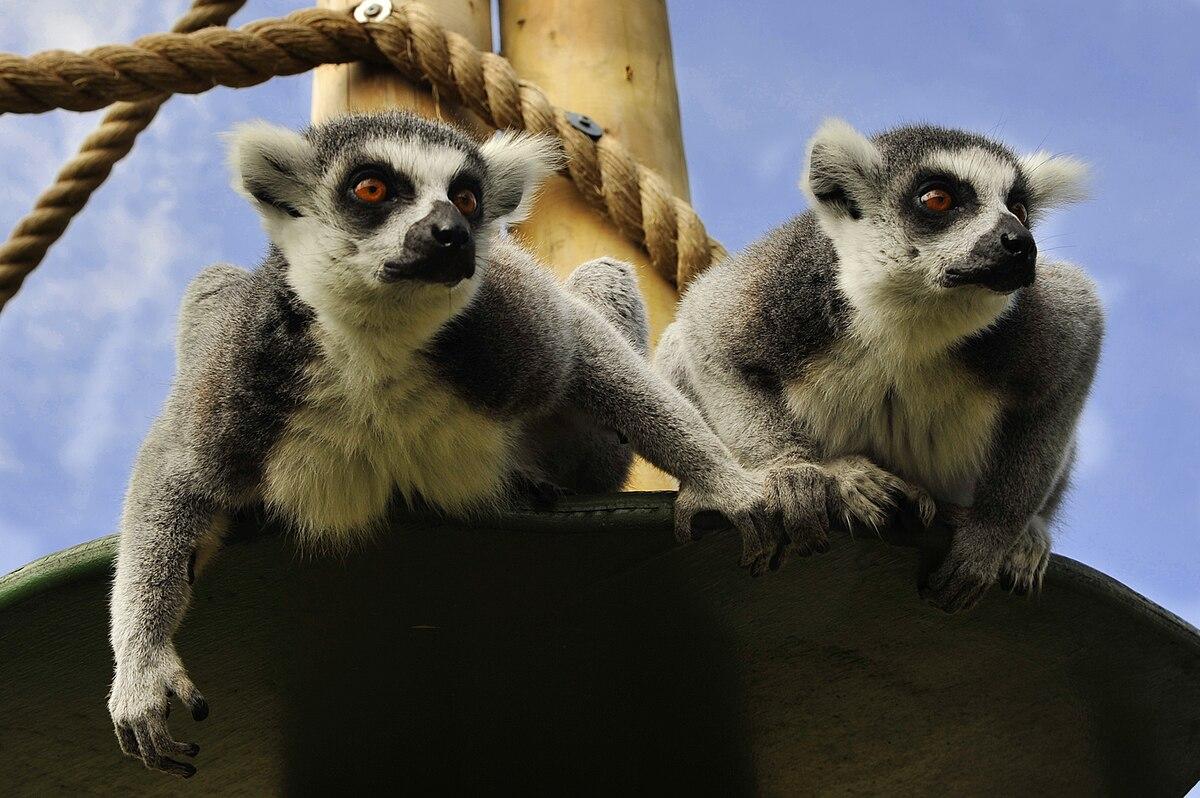 Drusillas Zoo Park - Wikipedia
