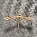 Lepidoptera (15877519518).jpg