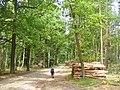 Lienewitz - Forstwirtschaft - geo.hlipp.de - 39303.jpg