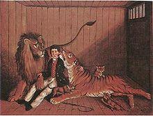 Lion-tiger2