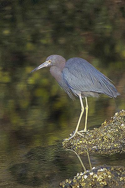 vogels lange snavel