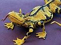 Lizard 蜥蜴 - panoramio.jpg