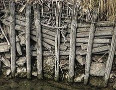 Llacuna del Samaruc (Algemesí-Parc Natural de l'Albufera) 13.jpg