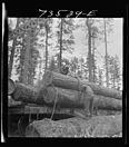 Loading logs on flatcar1942.jpg