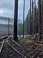 Logging National Park.jpg