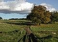 Londesborough Park - geograph.org.uk - 589164.jpg