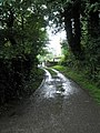 Looking from Rope Walk Meadow back towards Darby Road - geograph.org.uk - 1458462.jpg