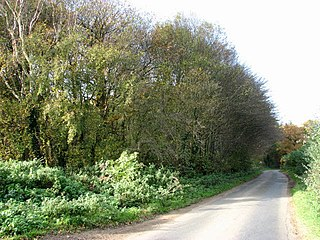 Hockering Wood