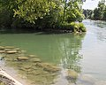 Lorze Flussmündung in die Reuss Obfelden 20160804-jag9889.jpg